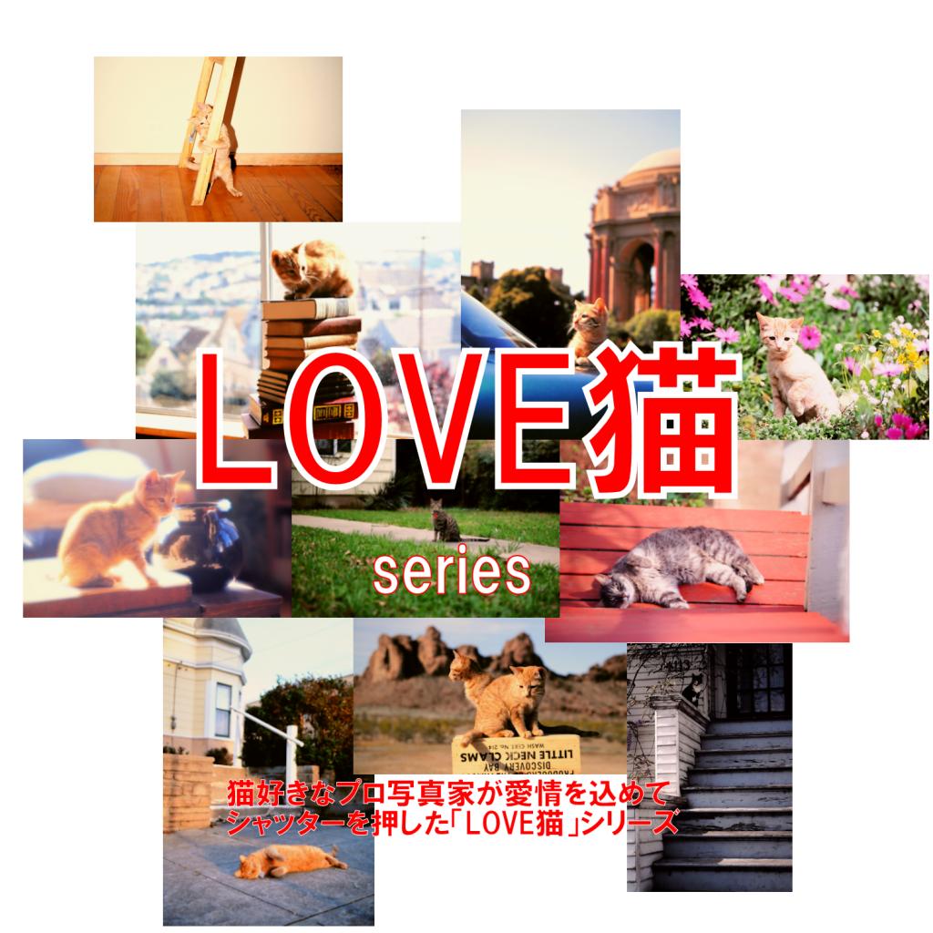 「LOVE猫」シリーズ | ユニバーサルフォトエージェンシー