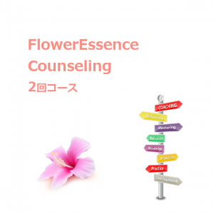 counseling_fe-basic_twice